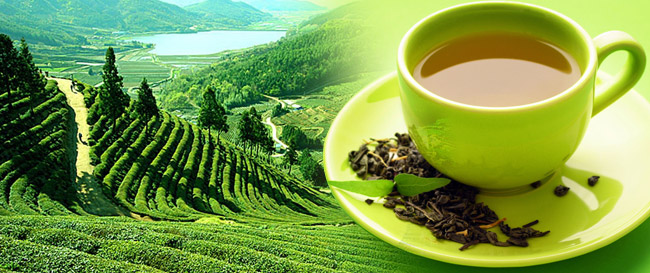 Чай. Мифы и Факты